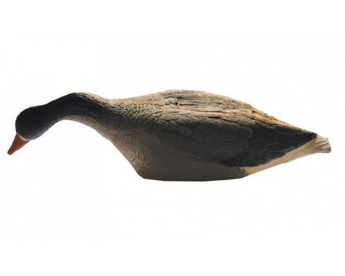 Чучело гуся белолобого кормящегося на опоре